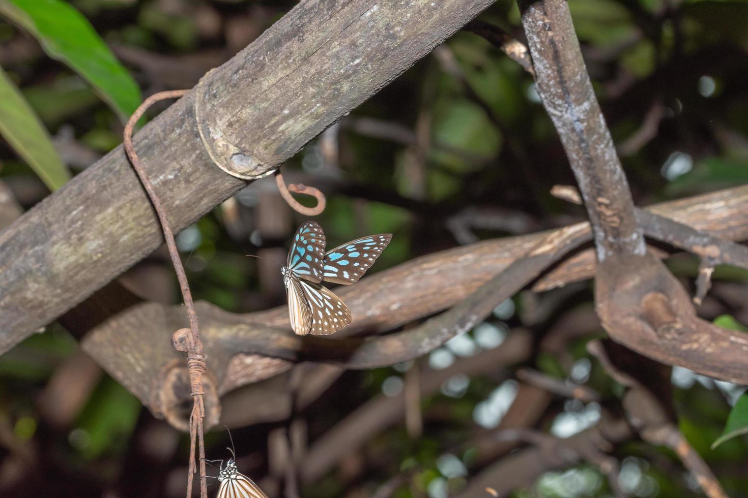 Schmetterling in der Natur foto