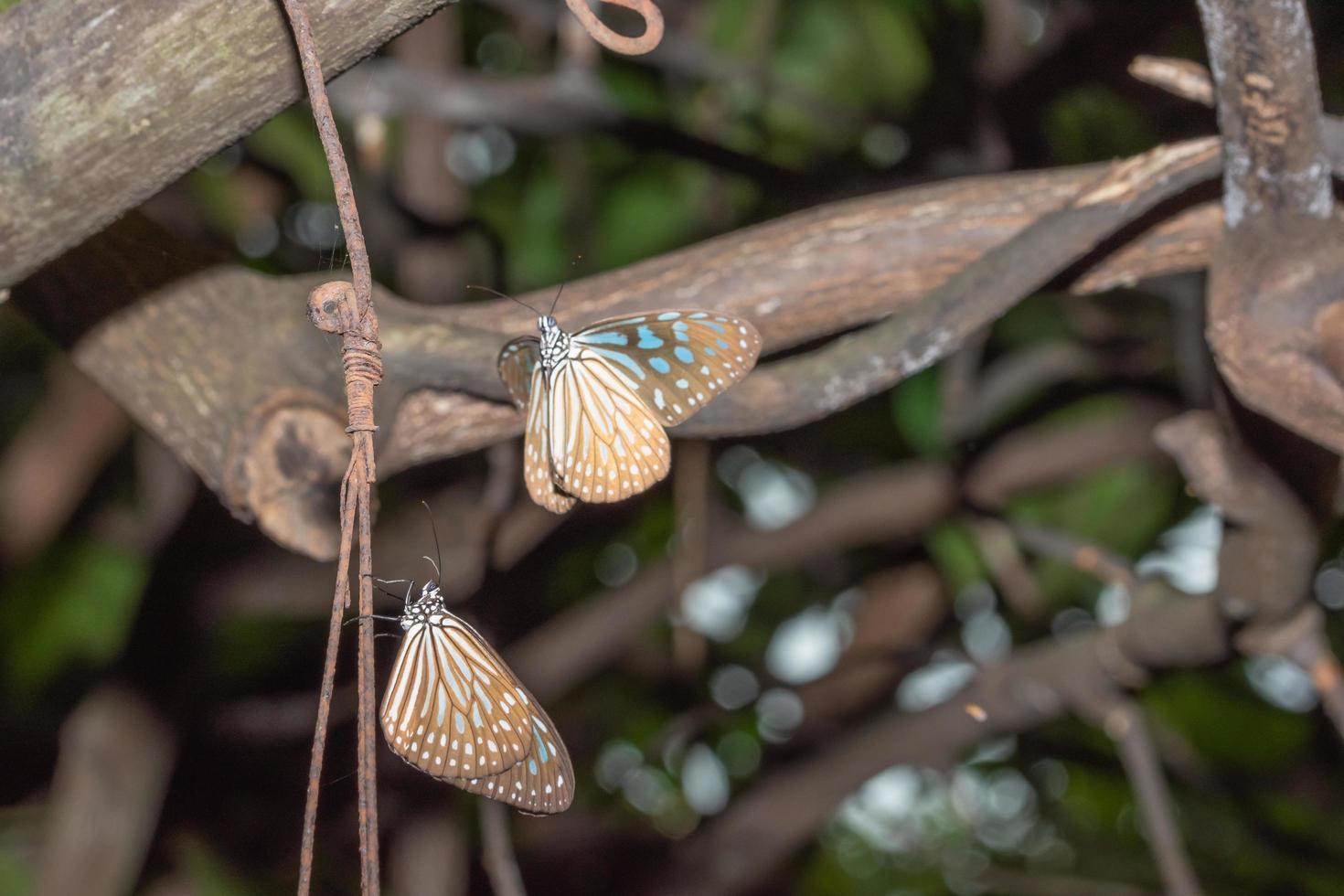 Schmetterlinge in der Natur foto
