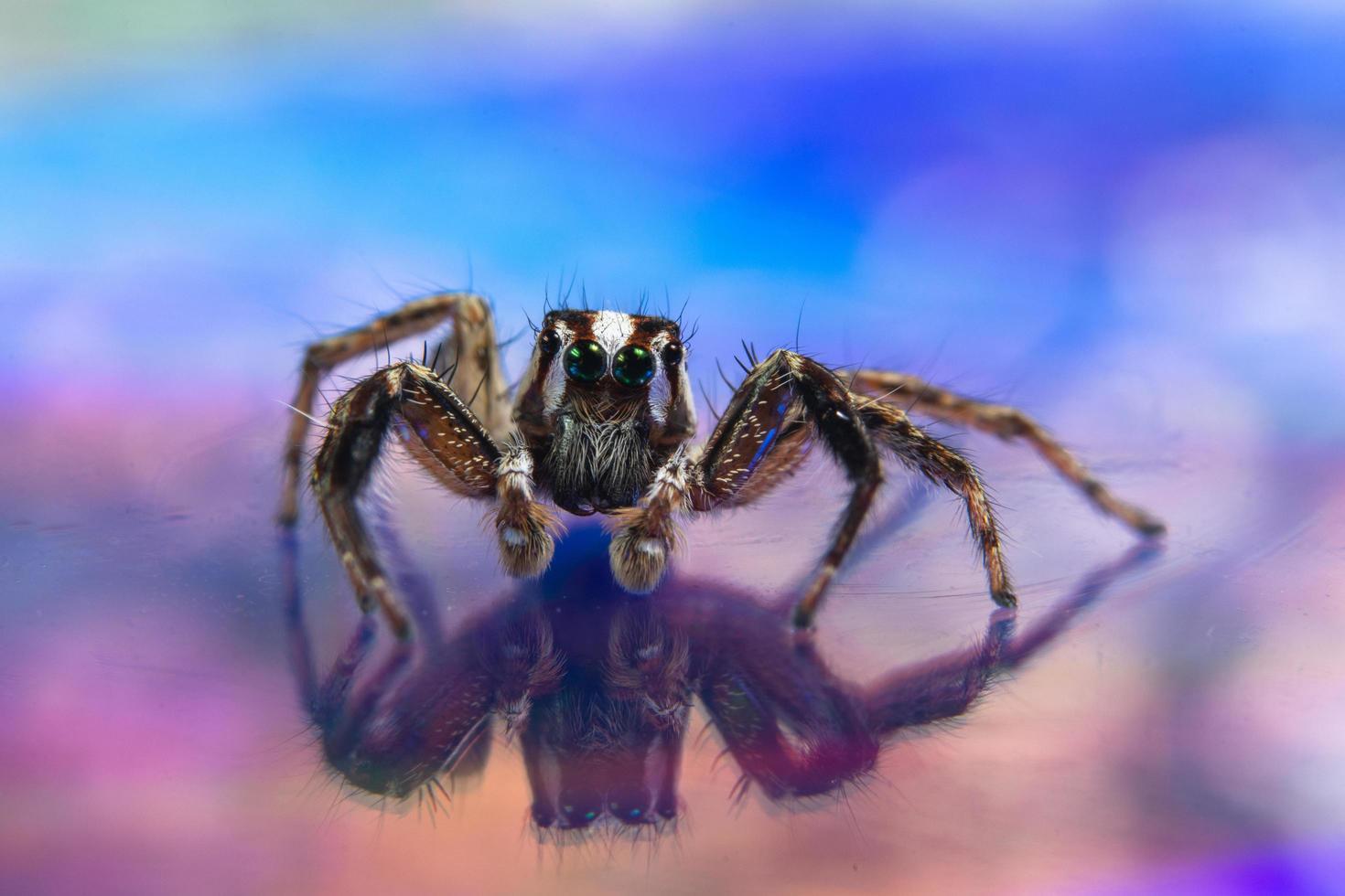 Spinne auf einem bunten Hintergrund foto