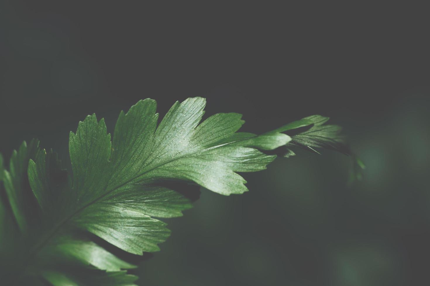 dunkler Blatthintergrund foto