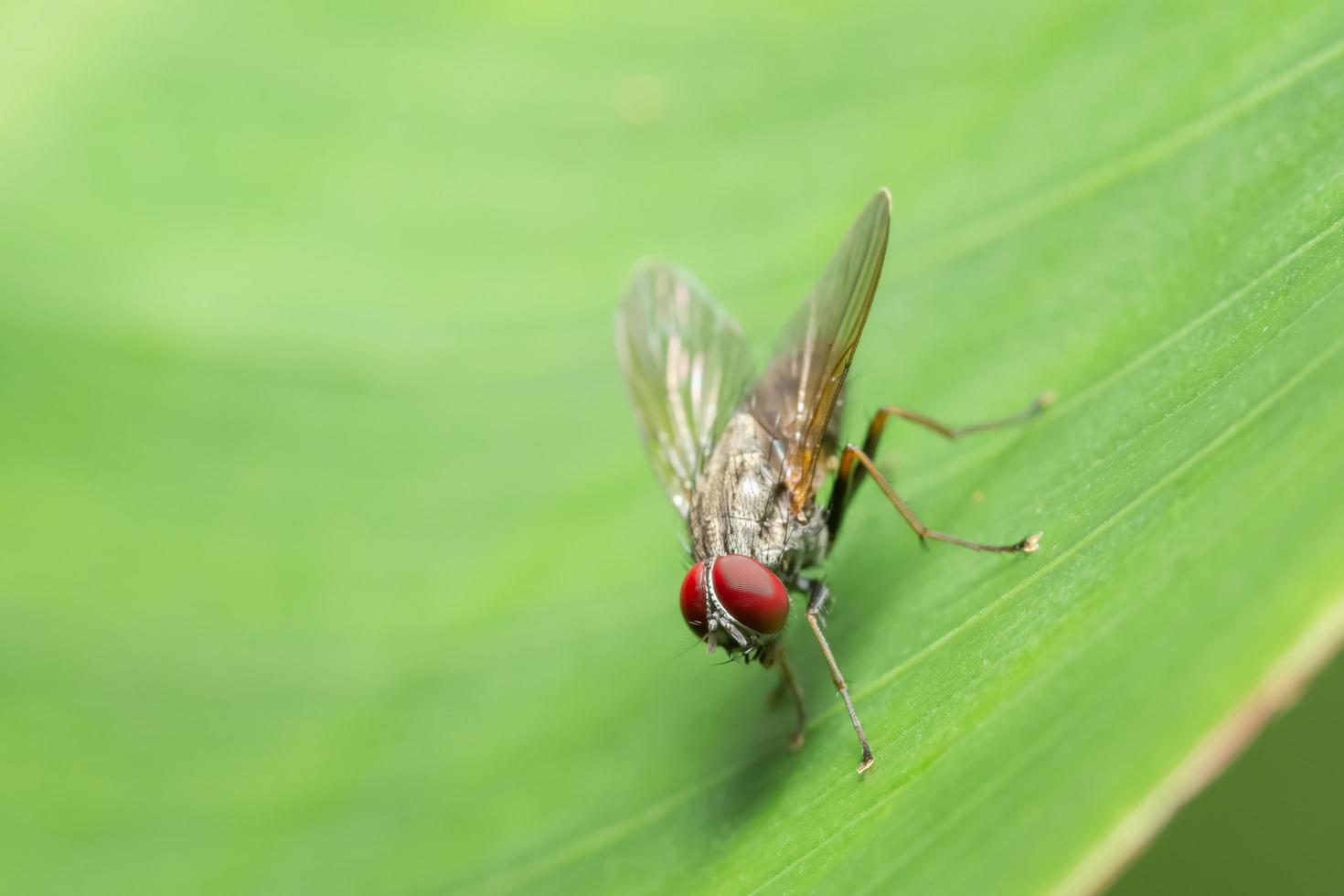 fliege auf grünem Blatt foto