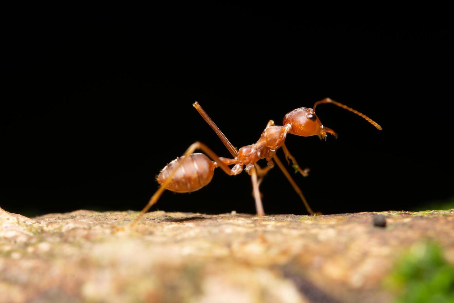 Ameise auf einer Pflanze foto