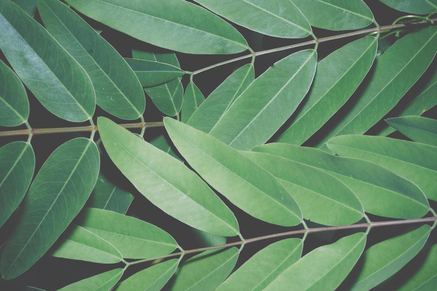 grüner Blatthintergrund foto