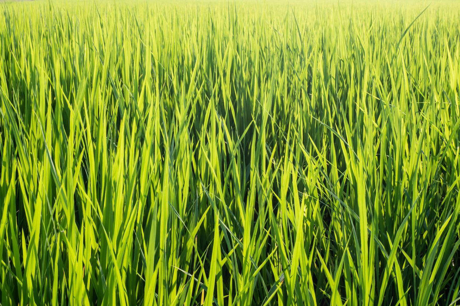 lebhaftes grünes Gras foto