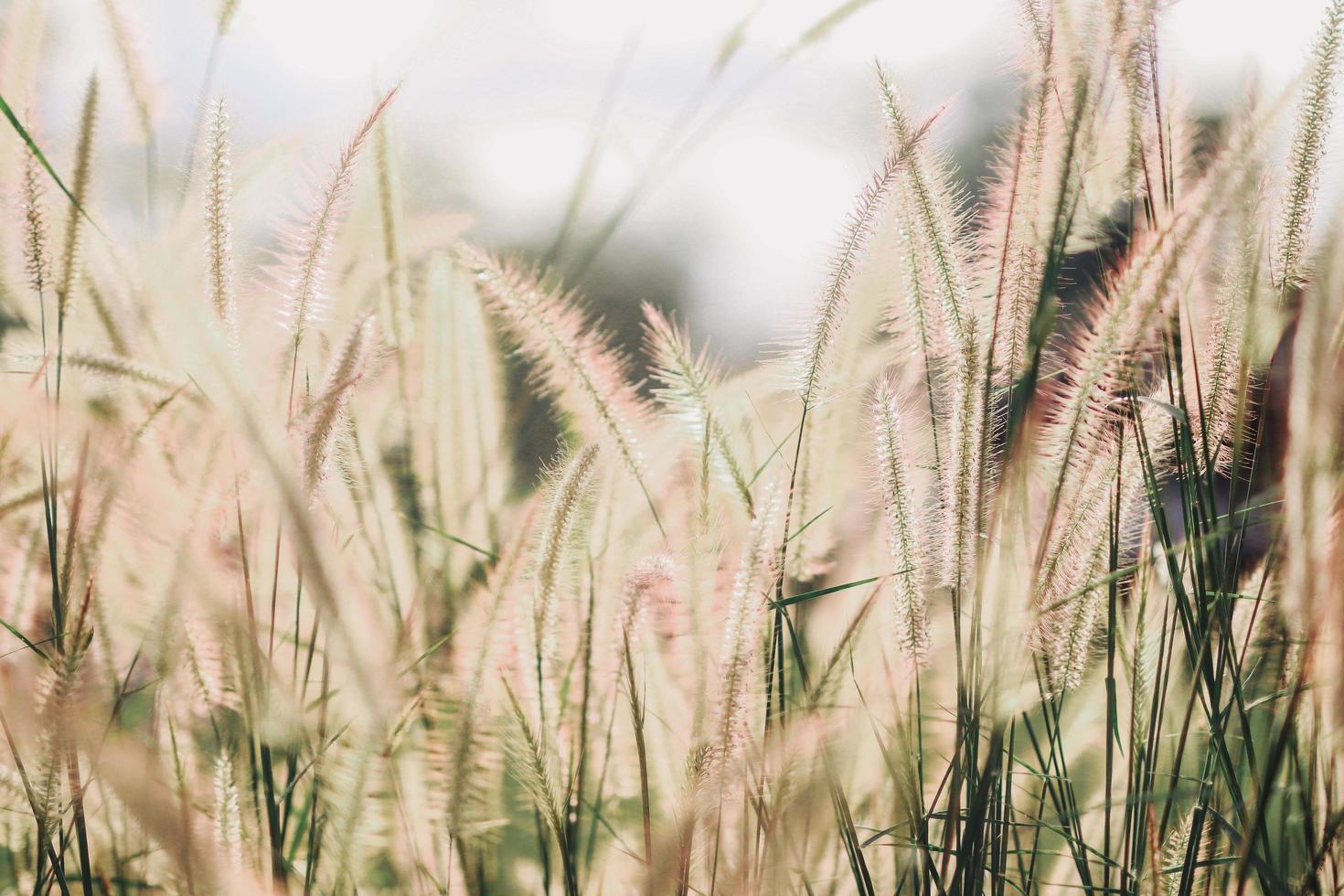 wildes Blumenfeld in der Natur foto