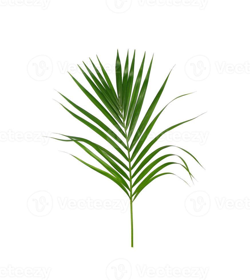 grünes Palmblatt auf einem weißen Hintergrund foto