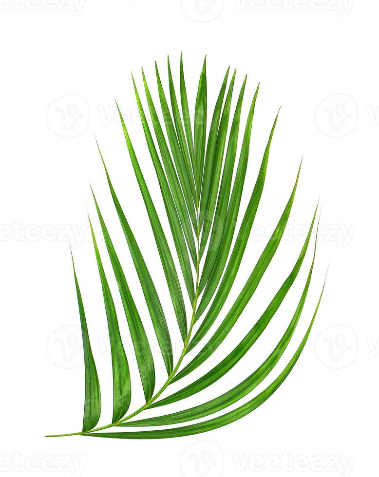 grünes Blatt lokalisiert auf einem weißen Hintergrund foto
