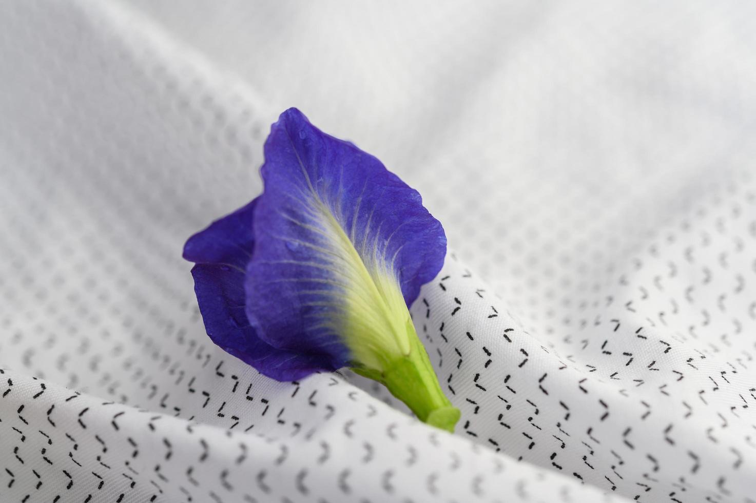 blaue Schmetterlingserbsenblume foto