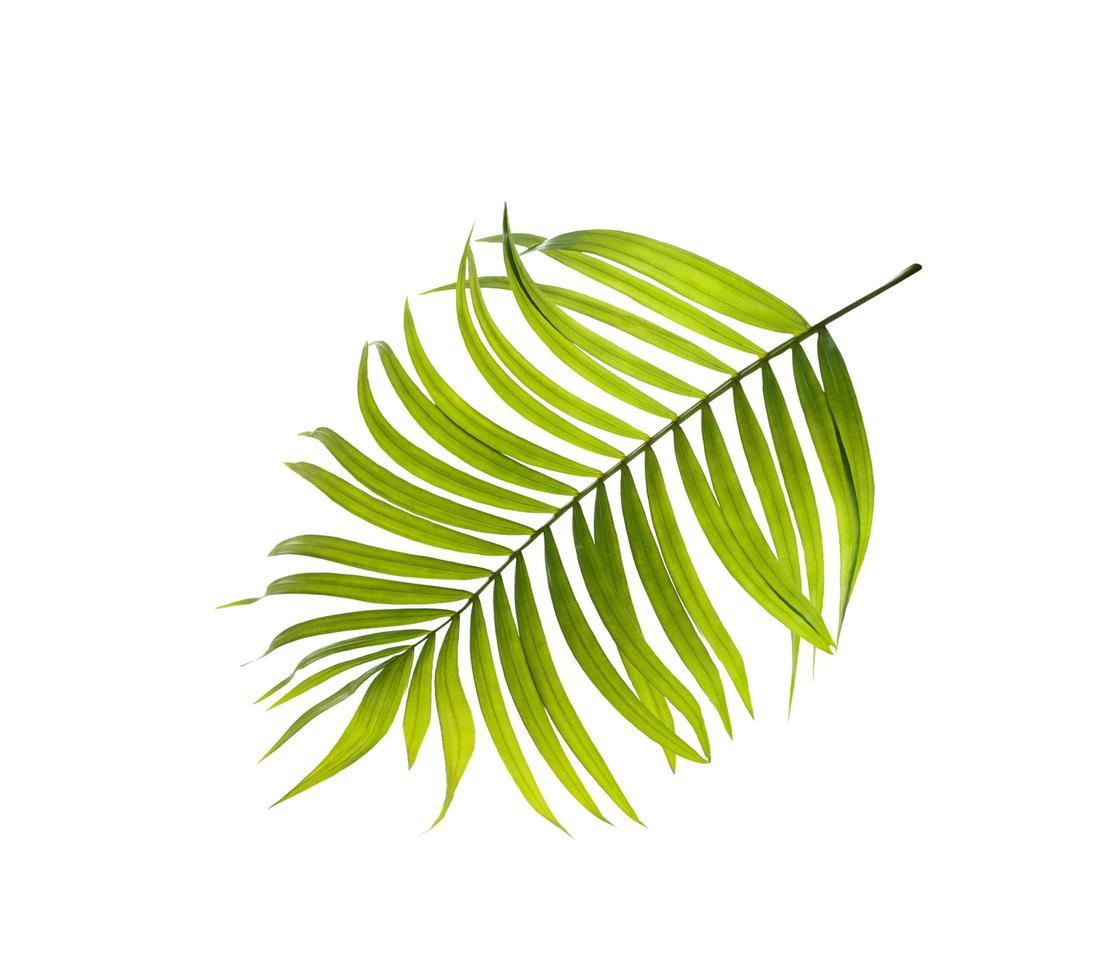 grünes Blatt auf einem weißen Hintergrund foto