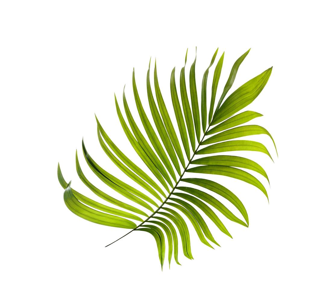 tropisches grünes Blatt foto