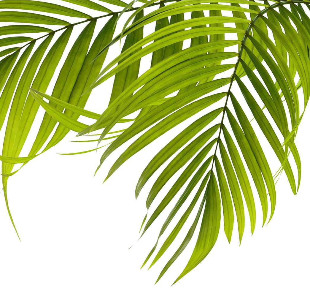 Gruppe von Palmblättern foto