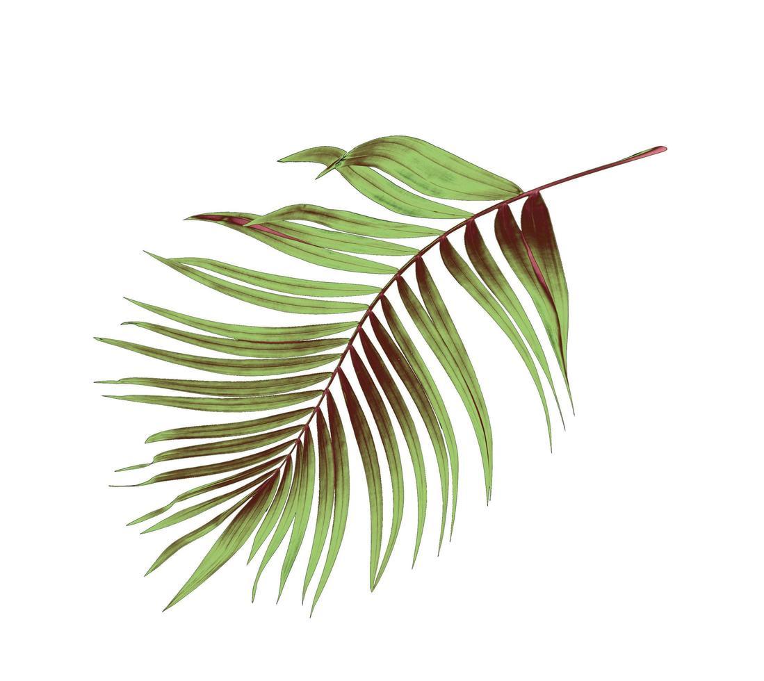 grünes und braunes Palmblatt foto