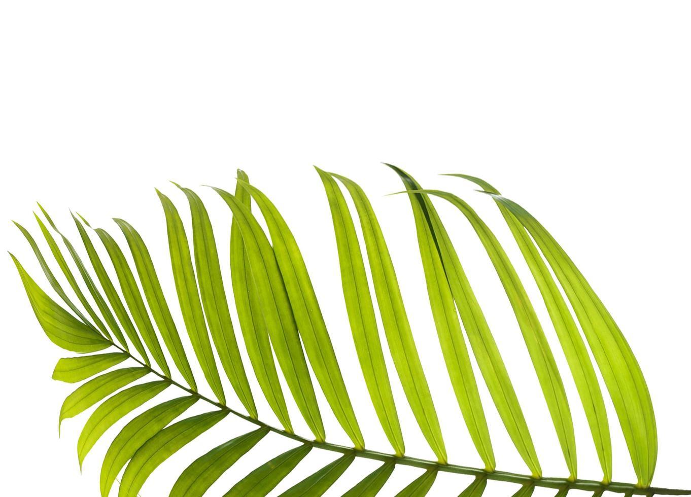 Nahaufnahme eines Palmblattes mit Kopierraum foto