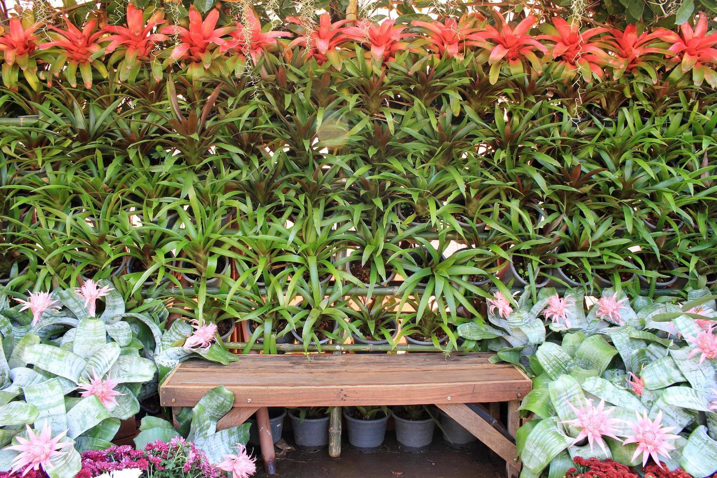 Holzbank im Garten foto