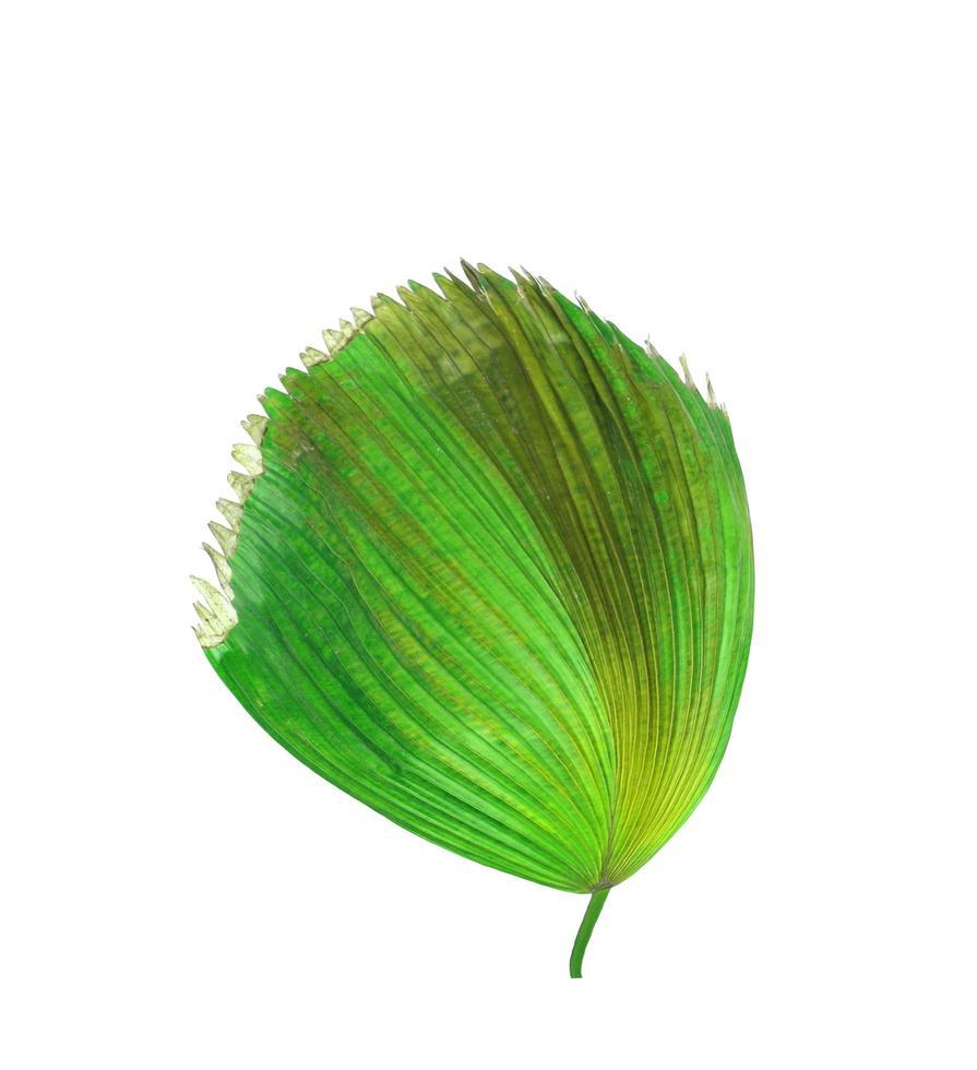 tropisches grünes und braunes Laub foto