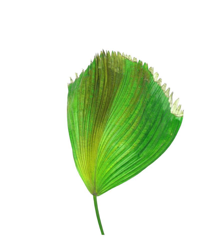 tropische Blätter mit braunen Flecken foto