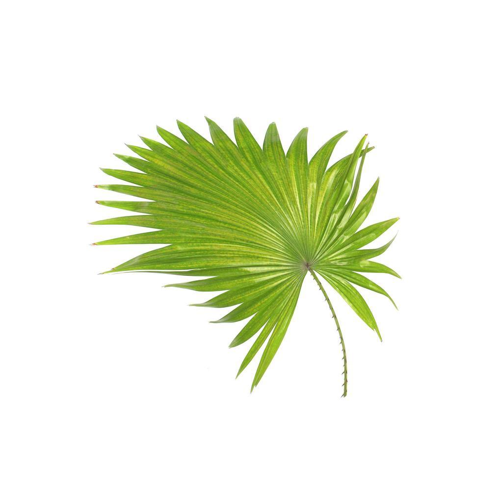 gebogene stachelige Blätter foto