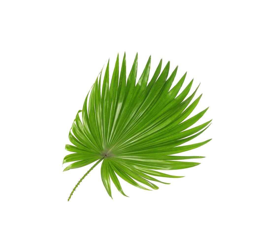 üppiges tropisches grünes Laub foto