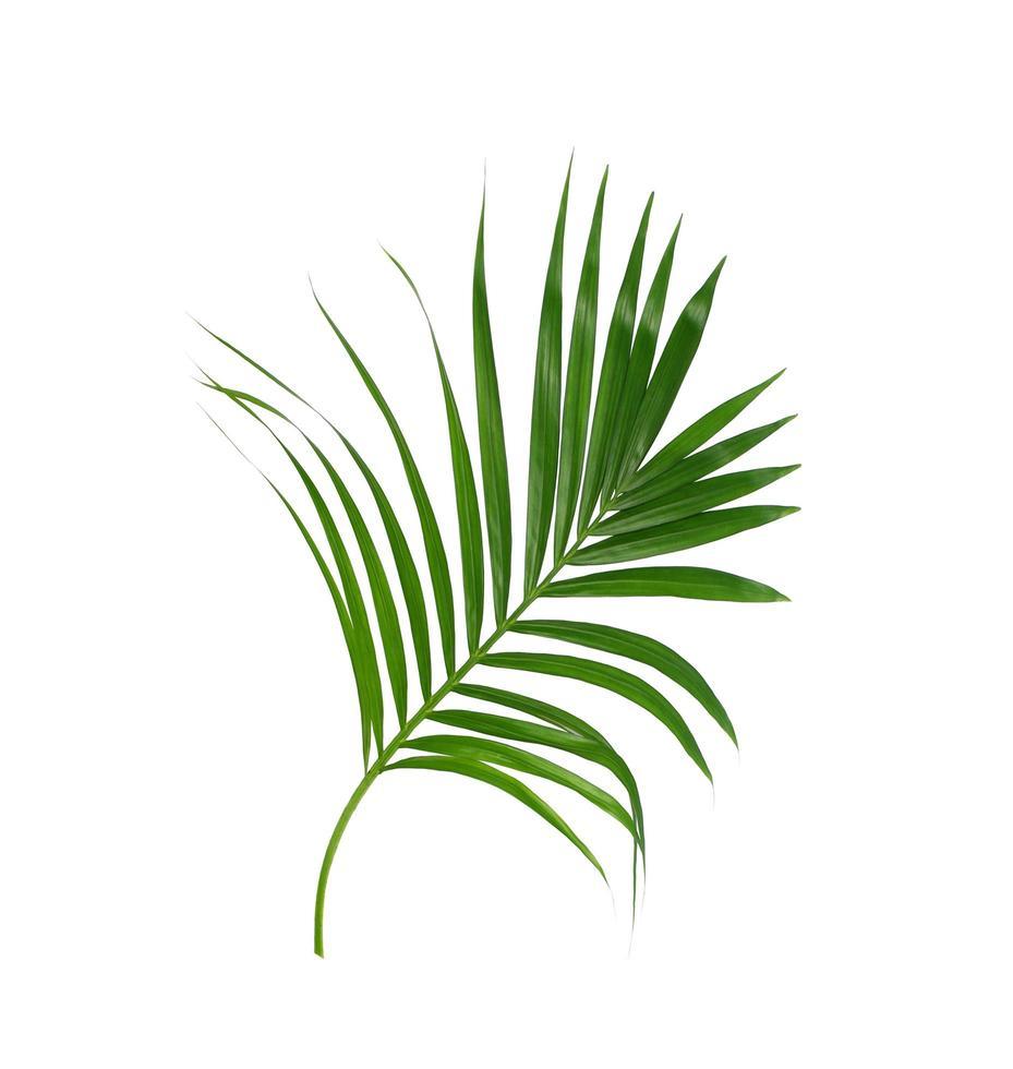 grünes tropisches Laub auf weißem Hintergrund foto