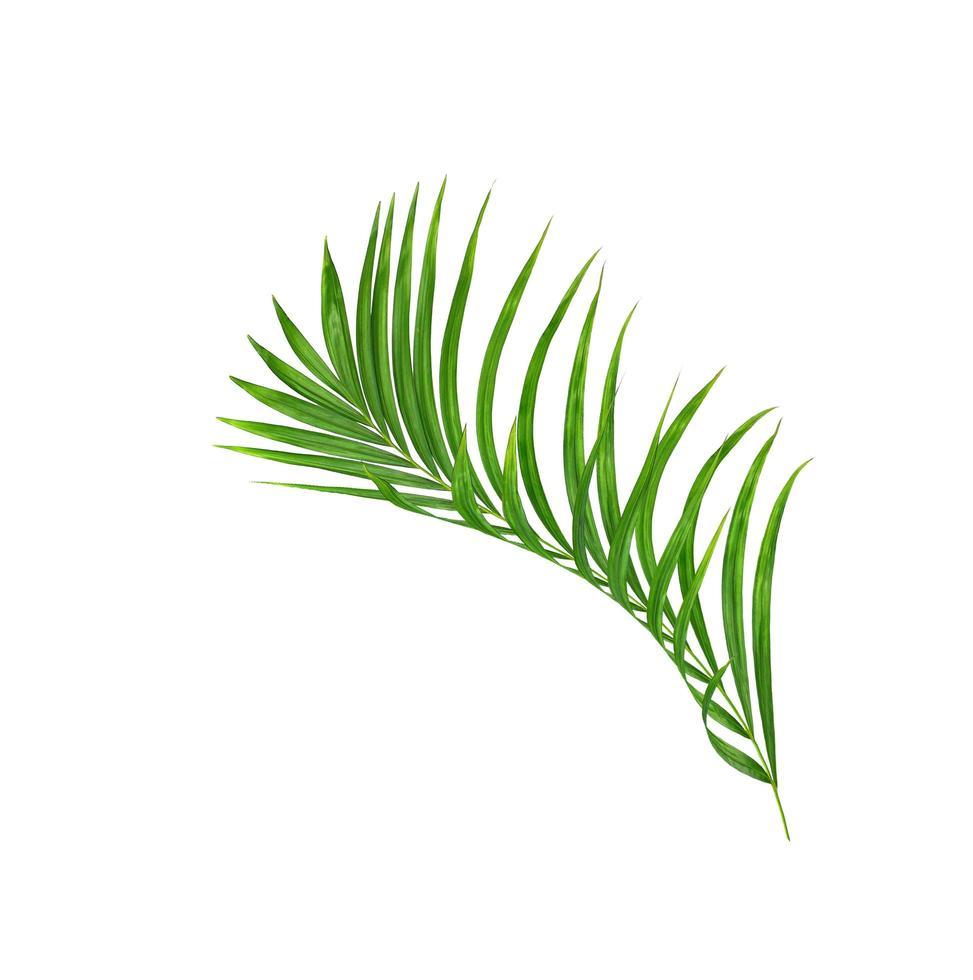 grüner tropischer Palmenzweig auf Weiß foto