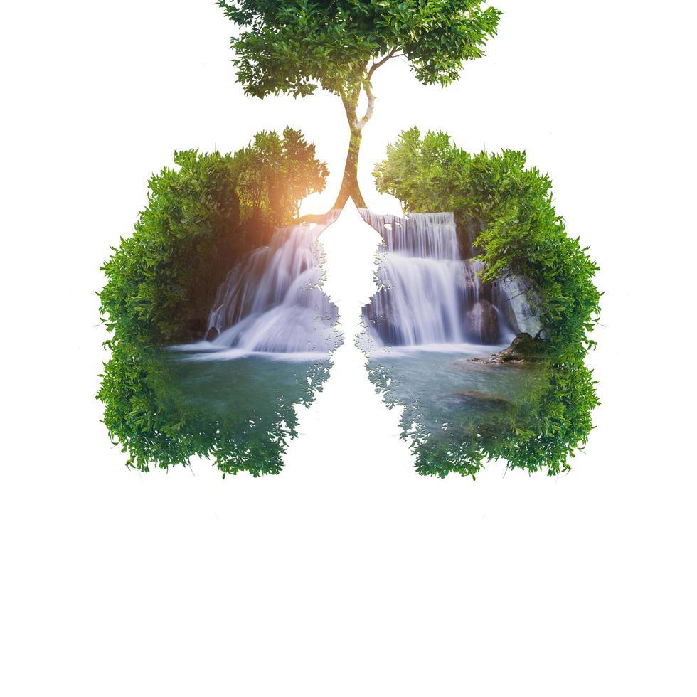 grüne Baumlungen mit Wasserfall foto