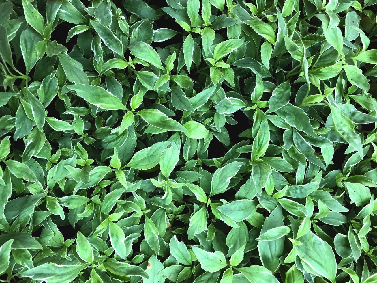 Gruppe von grünen Blättern foto