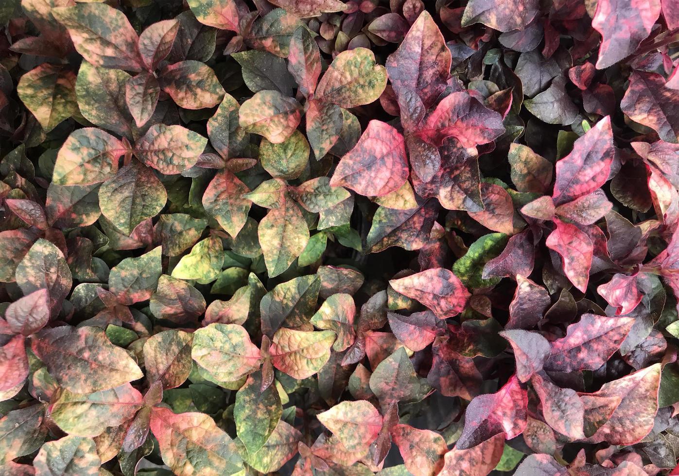 grüne und gelbe Blätter draußen foto
