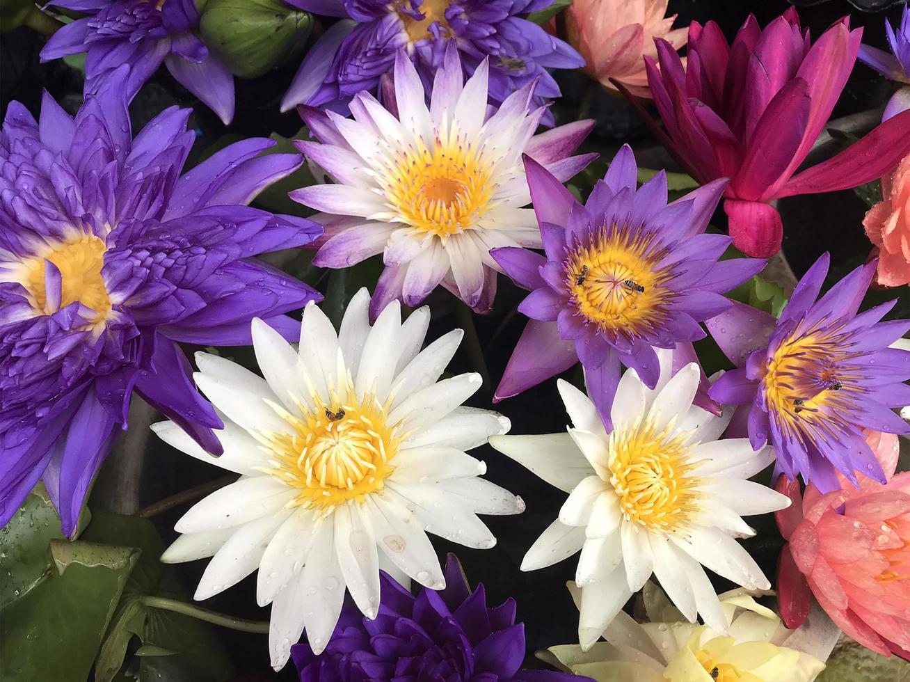 Gruppe von Lotusblumen foto