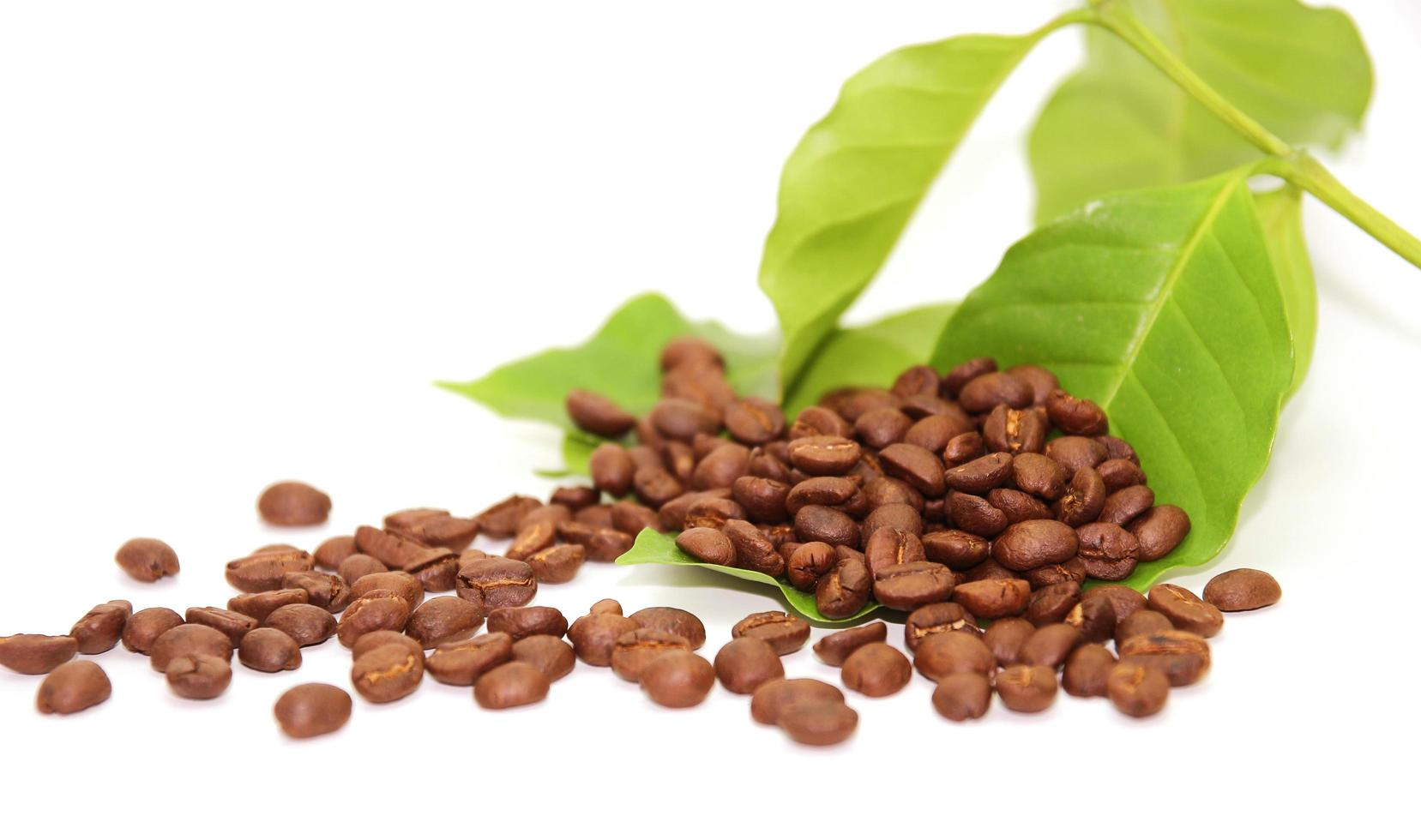 Haufen Kaffeebohnen mit Blättern foto
