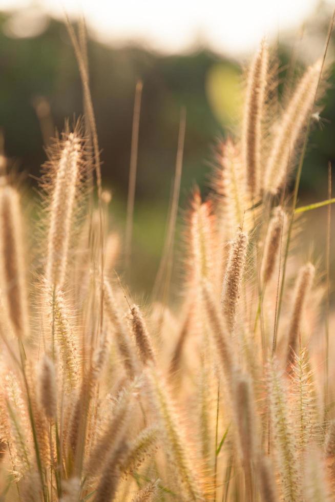 Blumen aus Gras foto