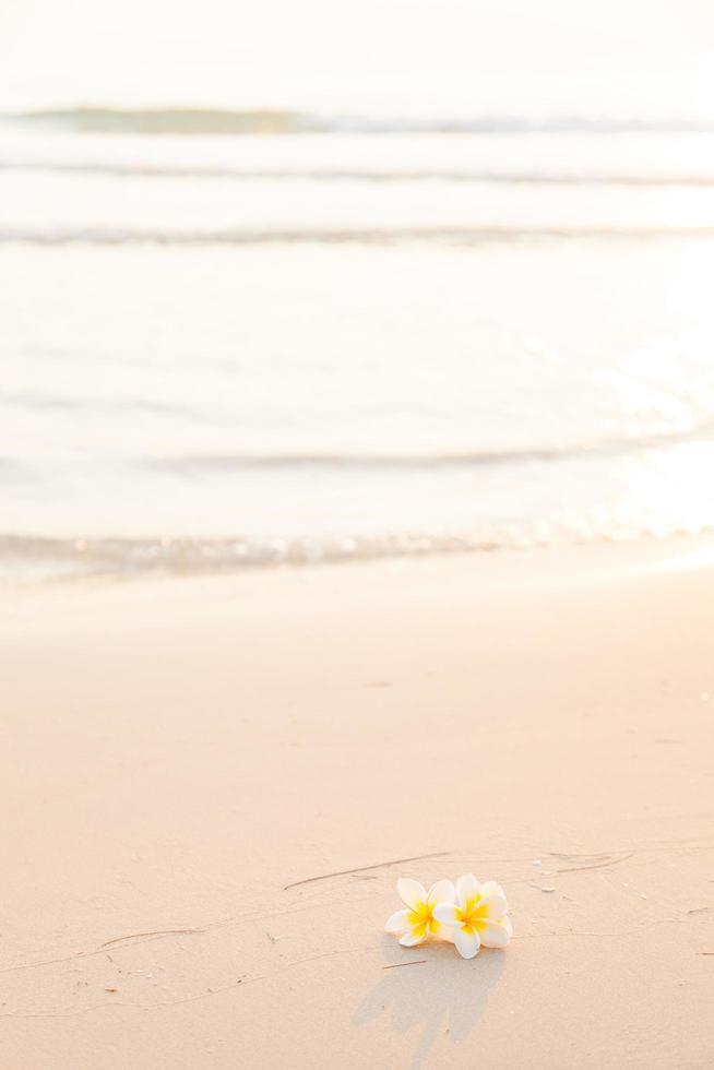 Blume auf dem Sand am Strand foto