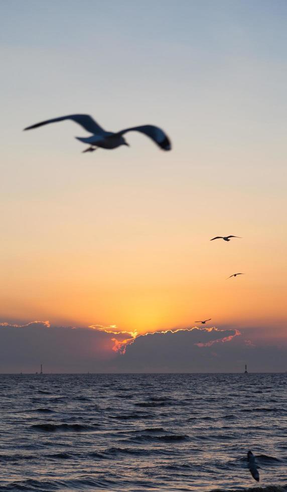 Sonnenuntergang und Möwen foto