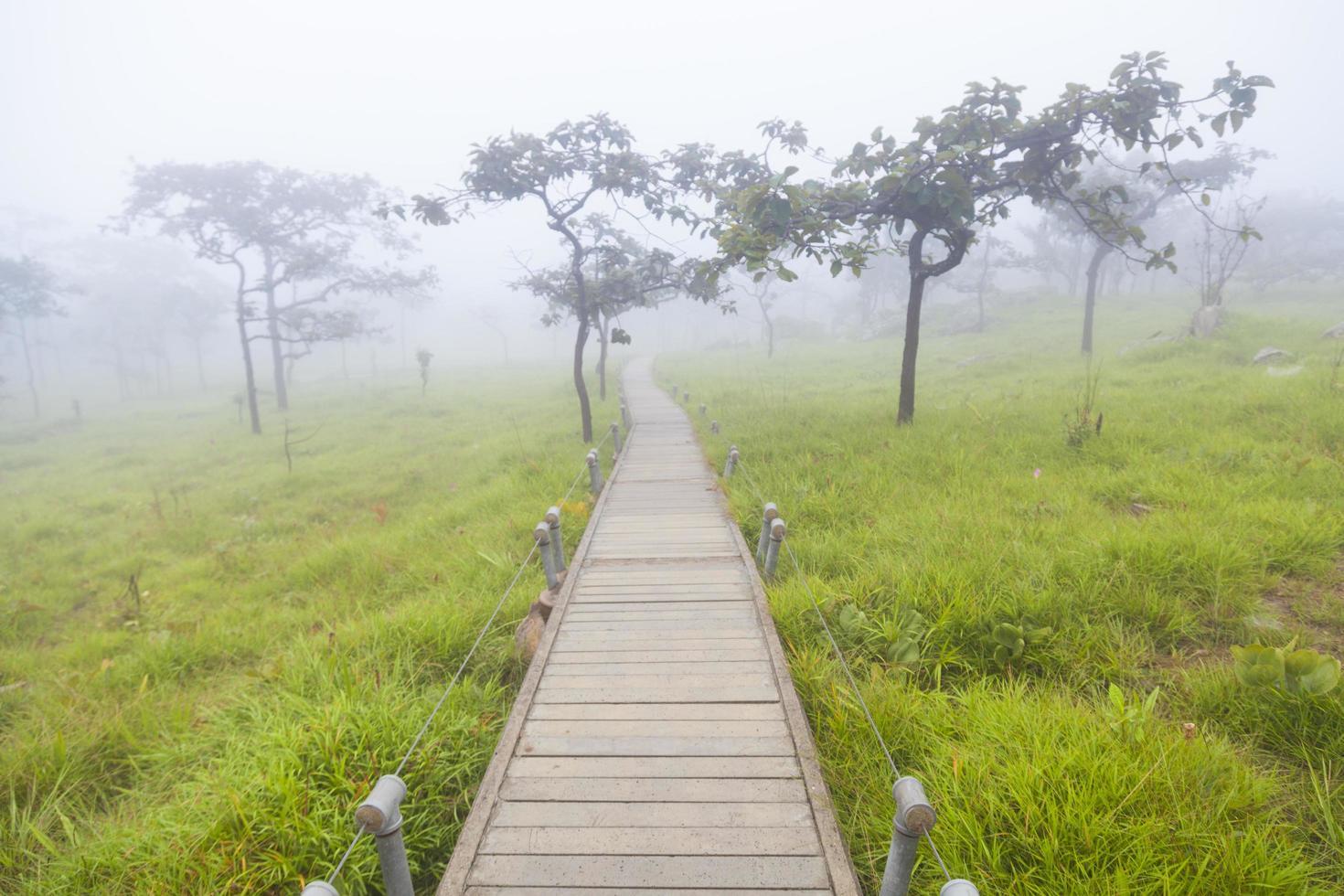 Holzsteg im Wald foto