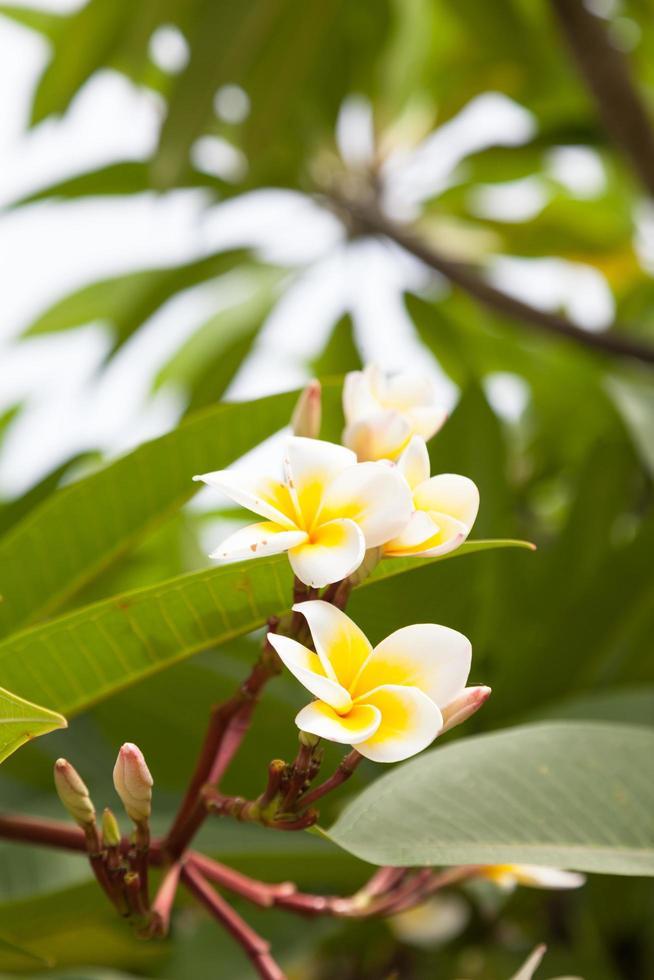 weiße Blumen auf einem Baum foto