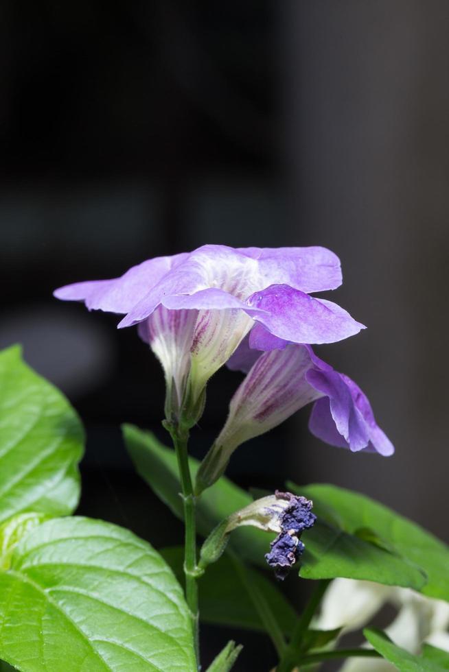 violette Blumen im Park foto