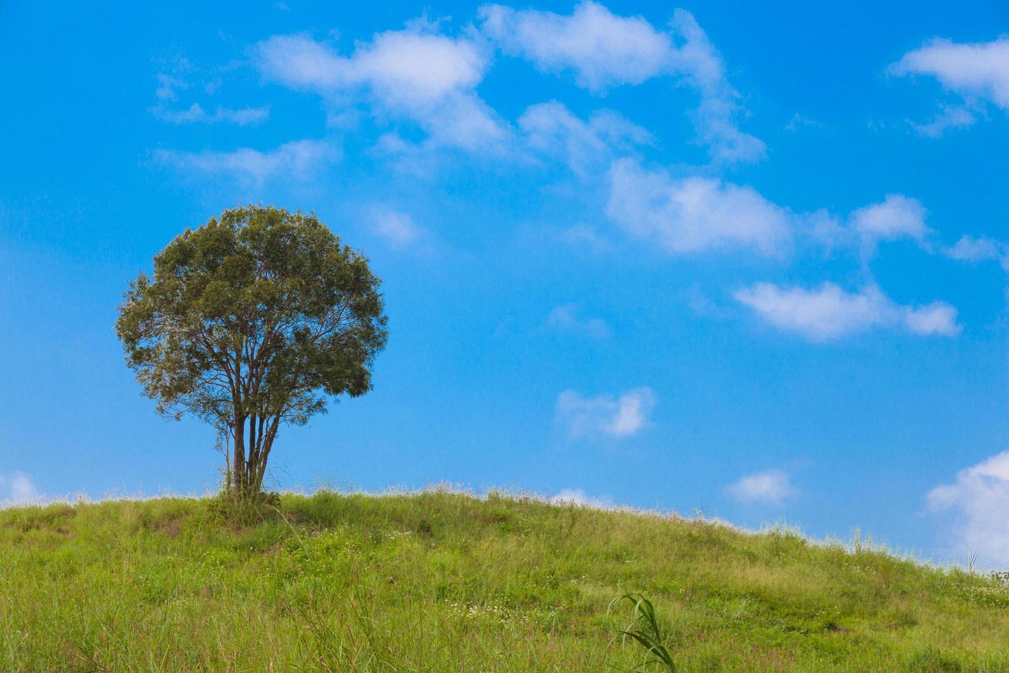Baum auf dem Hügel foto