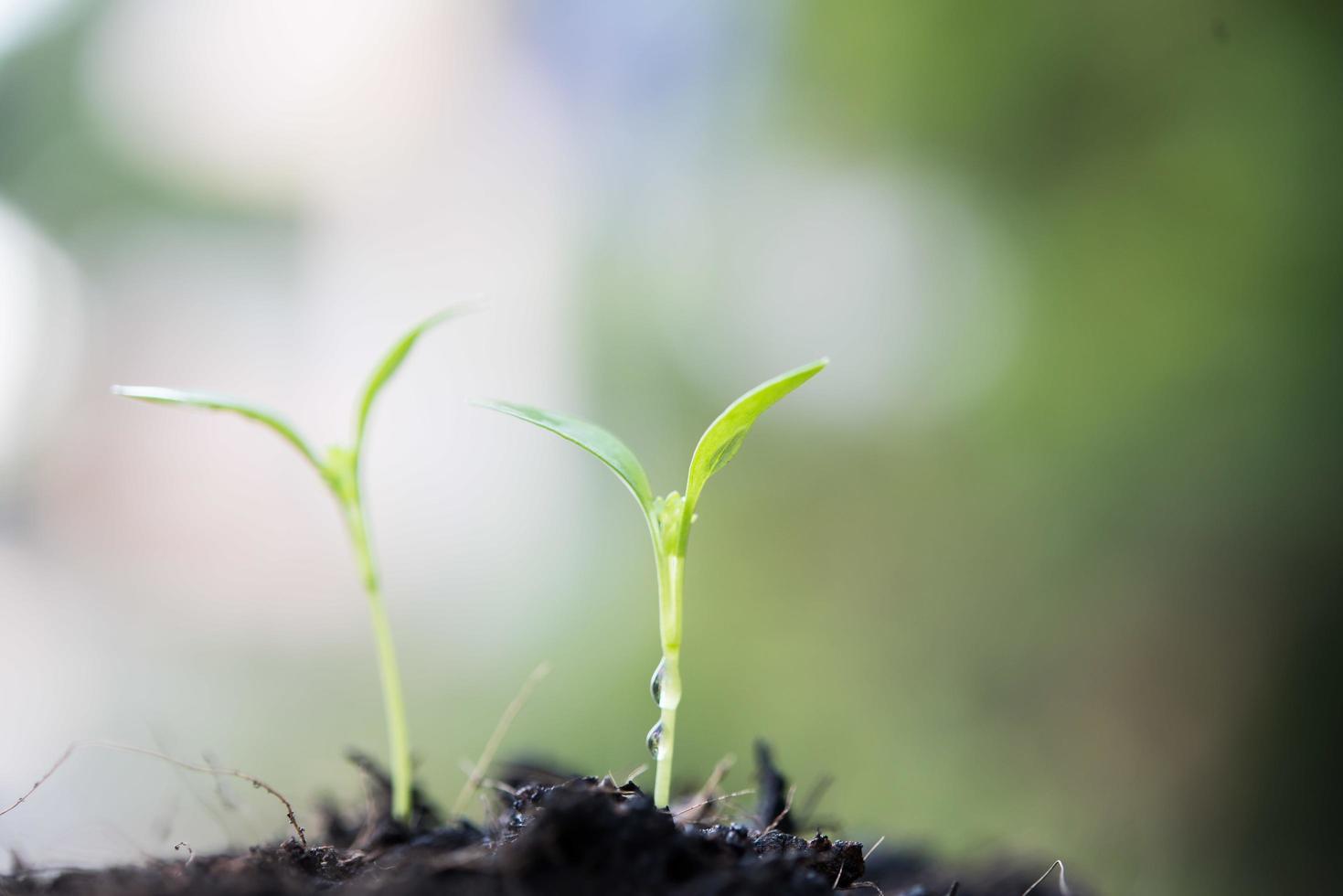 Nahaufnahme eines jungen Sprosses, der wächst foto
