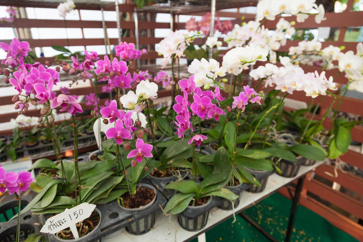 Orchideenblüten in Töpfen foto