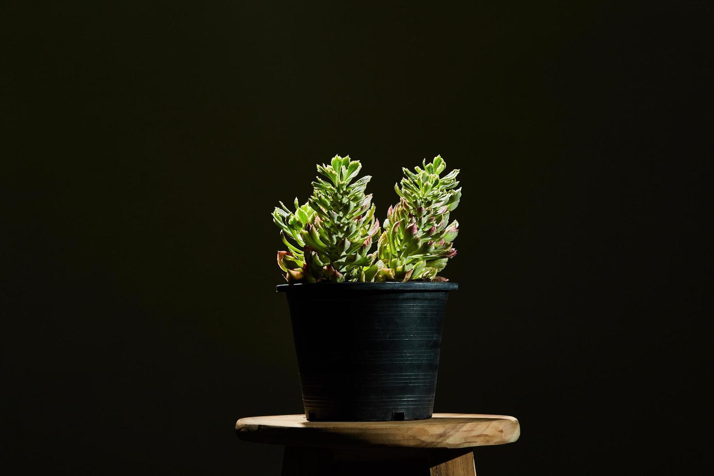 grüne Pflanze in einem Topf auf einem Hocker foto