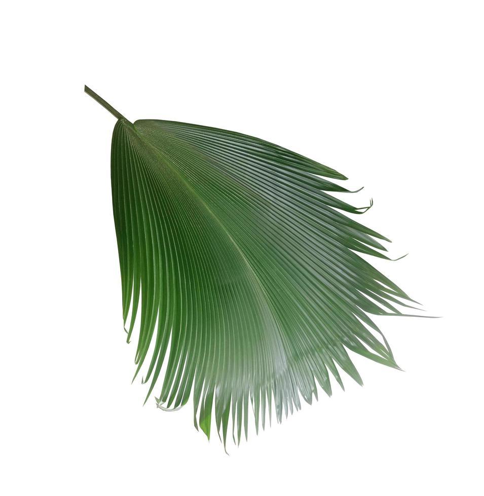 glänzendes tiefgrünes Fächerblatt foto