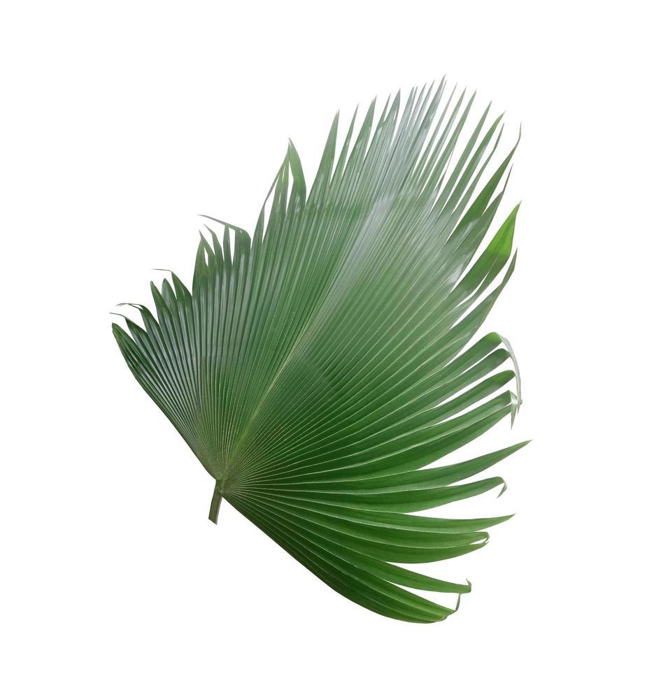 üppiges tiefgrünes Blatt auf Weiß foto
