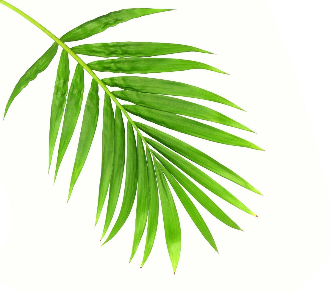 üppige leuchtend hellgrüne Blätter foto