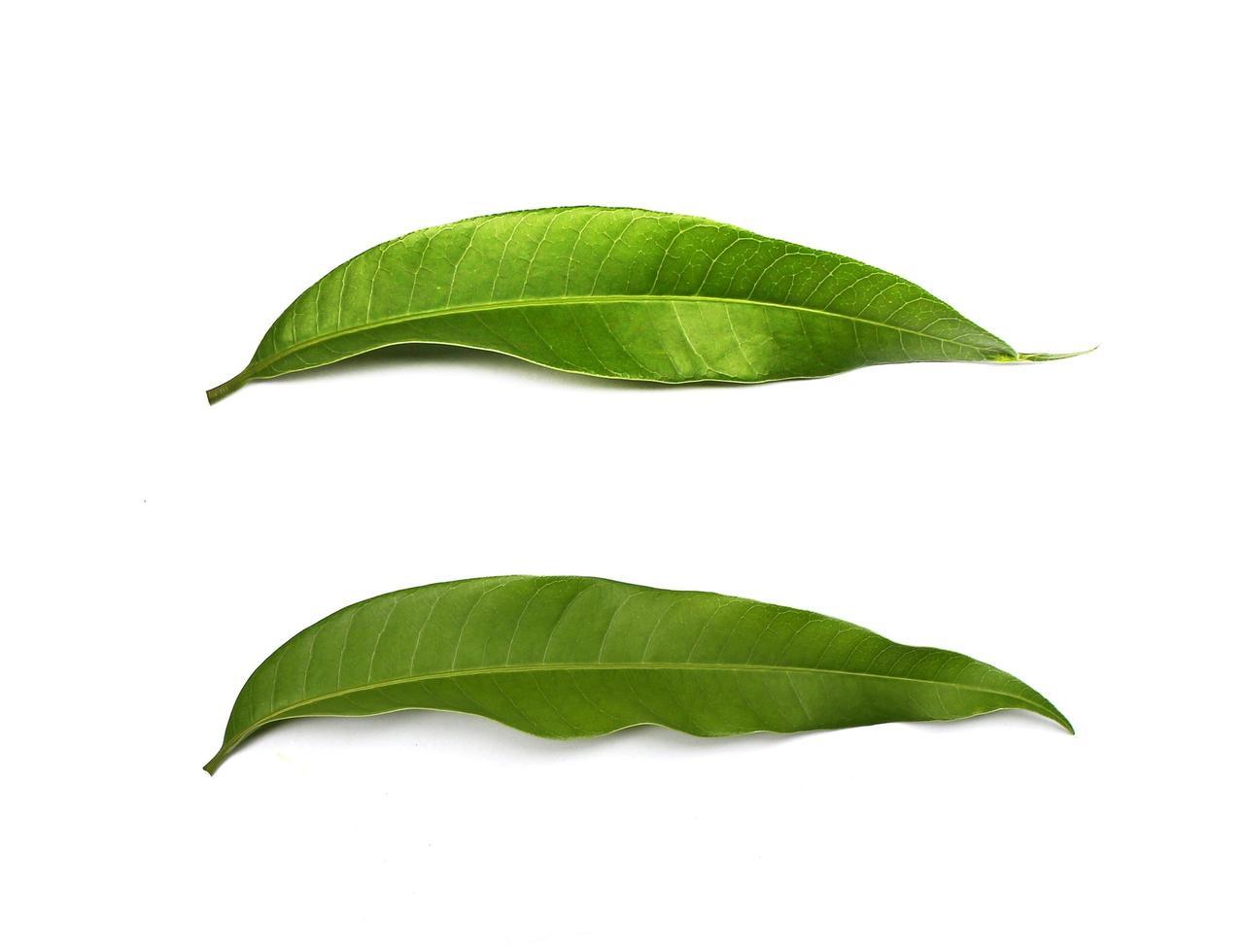 zwei grüne Blätter isoliert foto