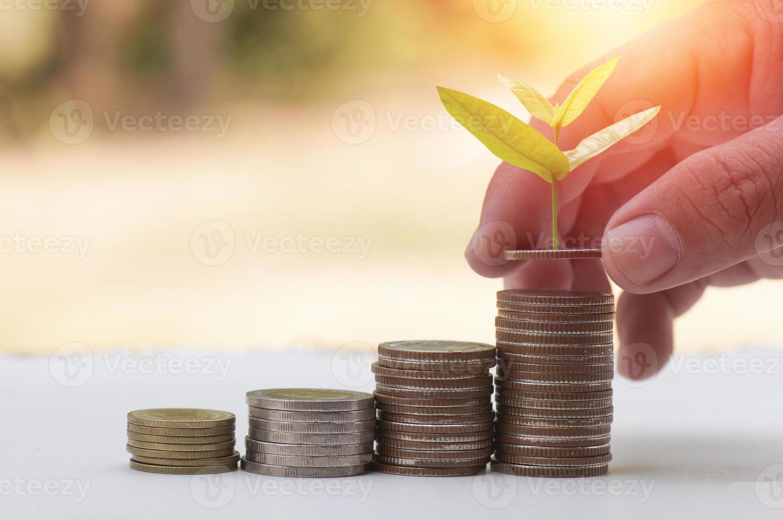 Baum wächst auf gestapelten Münzen auf foto