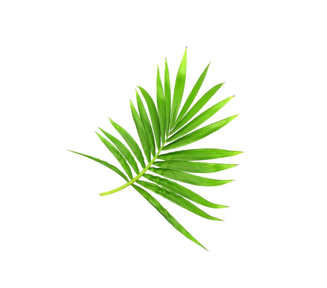 lebendige hellgrüne Blätter auf einem Zweig foto