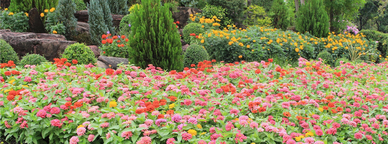 bunte Blumen im Garten foto