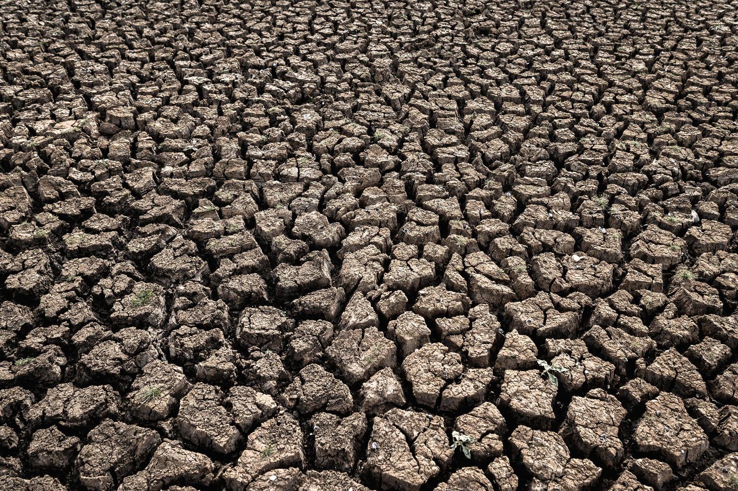 trockenes Land mit trockenem und rissigem Boden foto