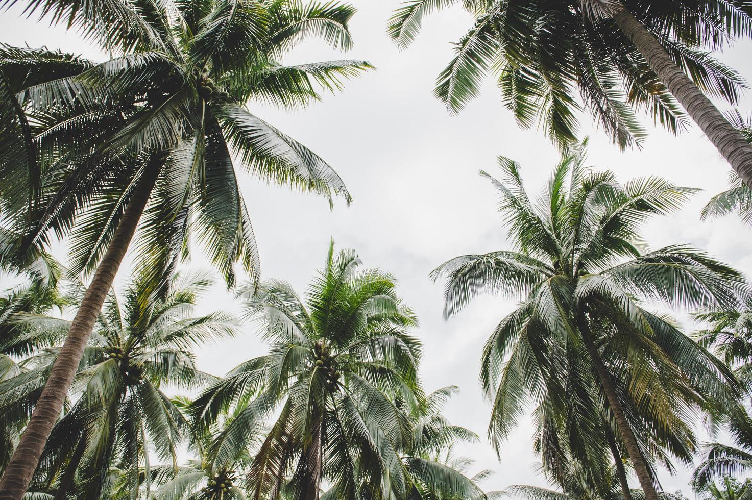 Kokosnussbaumgärten in Thailand foto