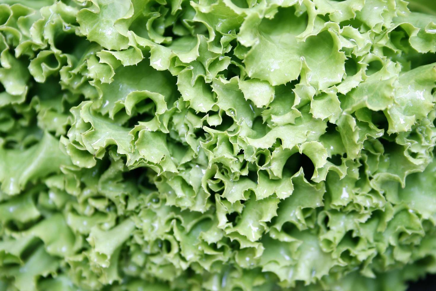 frischer grüner Salat foto