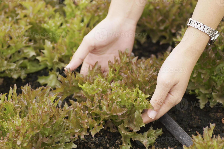 Hände mit Bio-Gemüse foto